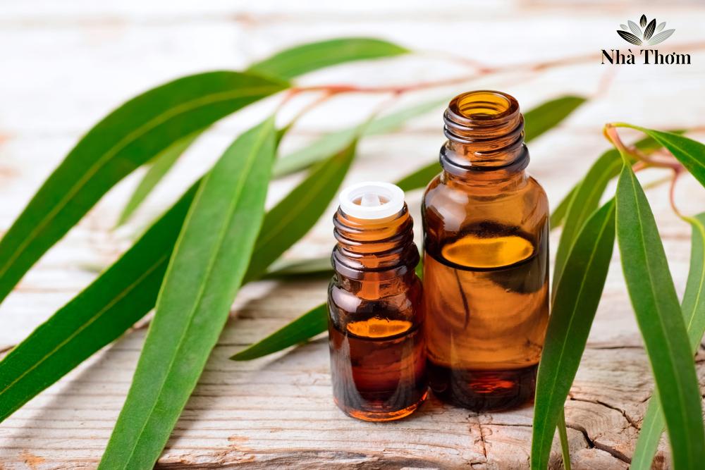 Tinh dầu bạch đàn chanh hỗ trợ hô hấp